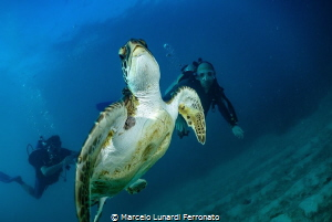 Turtle and divers by Marcelo Lunardi Ferronato