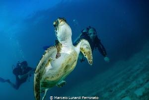 Turtle and divers by Marcelo Lunardi Ferronato