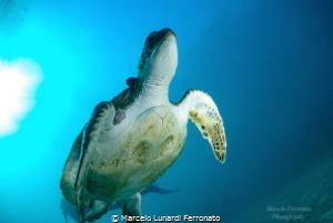 Turtle i by Marcelo Lunardi Ferronato
