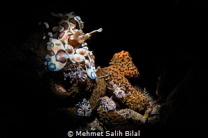 Harlequin mother and her babies. by Mehmet Salih Bilal