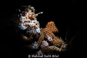 Harlequin mother and her babies. by Mehmet Salih Bilal