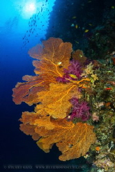 Sea Fans by Stuart Ganz