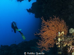 Bunaken by Robby Quento