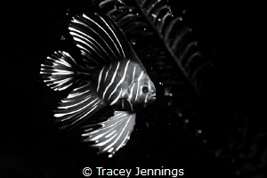 Black and white by Tracey Jennings