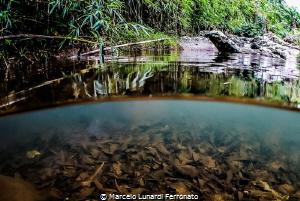 The river in the jungle by Marcelo Lunardi Ferronato