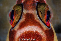 Fisheye Closeup by Khaled Zaki
