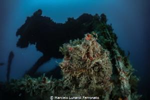 A shipwreck and a wolf by Marcelo Lunardi Ferronato