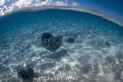 """""""Making the Rounds"""" Just on the edge of the sandbar wher... by Chase Darnell"""