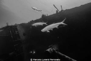 Tarpoon and wreck by Marcelo Lunardi Ferronato