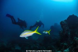 Fish and divers by Marcelo Lunardi Ferronato