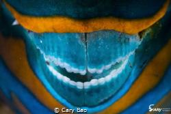 Simle by Cary Bao