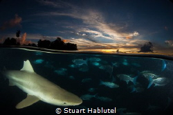 Blacktip Sunset Split  After a long day of chasing thes... by Stuart Hablutel