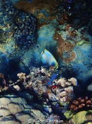 Hide-a-fish by Alison Ranheim