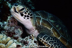 Turtle beauty taken with Nikon AW 130 at snorkeling by Carsten Schroeder
