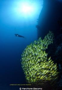 Blue stripers . Maldives Nikon D800E , 16mm , two strobo by Marchione Giacomo