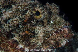 He thought I couldn't see him.  The Scorpion Fish Portrait by Frankie Rivera