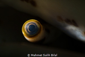 The Eye. by Mehmet Salih Bilal