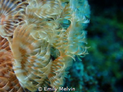 Featherworm Abstract by Emily Melvin