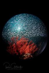 Planet Misool-West Papua by Richard Goluch