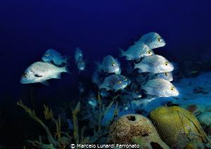 Fish in the background by Marcelo Lunardi Ferronato