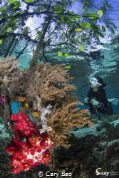 Diver at Mangrove by Cary Bao