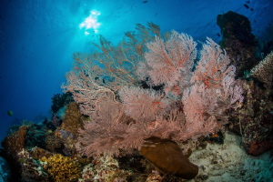 Underwater ecosystem health, corals grow very well! by Tony Ho