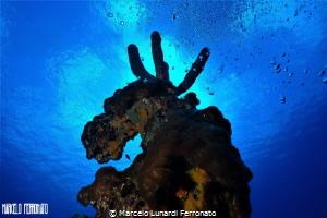 MOOSE OF THE SEA by Marcelo Lunardi Ferronato