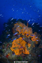 """""""Colorful Corner"""" This is an out cropping on the dive si... by Chase Darnell"""