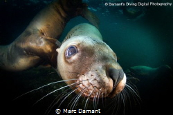 A face full of whiskers! by Marc Damant