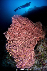 Lungs of the ocean by Taner Atilgan