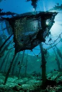 Underneath the fishing net. Arborek, Raja Ampat. by Filip Staes