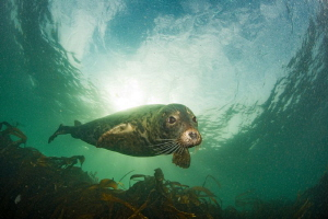 Seal, Farne Islands, UK by Spencer Burrows