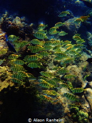 Group Swim by Alison Ranheim