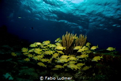 Blue and Yellow by Fabio Ludmer