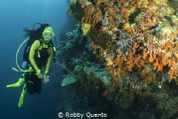 Wakatobi Wall by Robby Quento