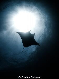 Dream a little dream ...  Manta Ray - Manta alfredi  ... by Stefan Follows
