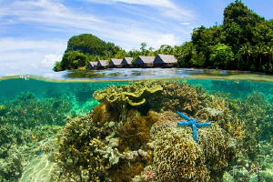 View over the island and housereef of Pulau pef. Raja Amp... by Filip Staes