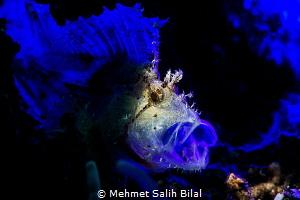 Yawning. by Mehmet Salih Bilal
