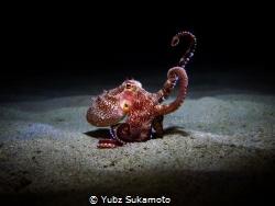 coconut octopus by Yubz Sukamoto