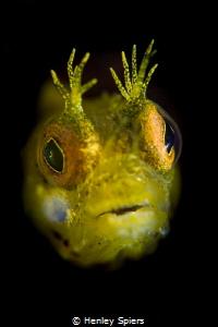 Fish Geek by Henley Spiers