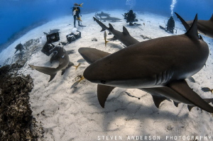 As our daily adventure begins the sharks begin to take ce... by Steven Anderson