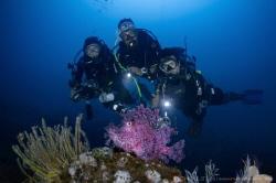C E L E B R I T Y Weedy Scorpionfish (Rhinopias frondosa... by Irwin Ang