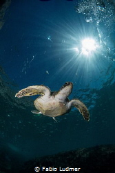 Intrepid Turtle by Fabio Ludmer