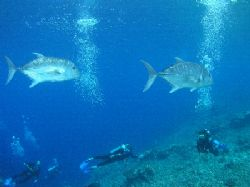 Safety Stop, Sipadan Island, First Dive and the visibilit... by Damien Preston