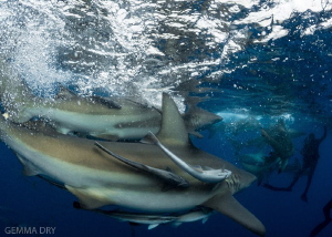 Shark Soup - The good kind :-) by Gemma Dry
