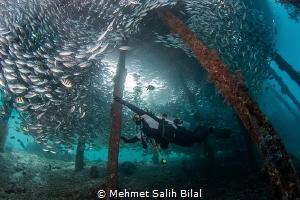 Playing with silverside shoal. by Mehmet Salih Bilal