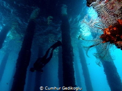 My buddy My Buddy was free diving training. by Cumhur Gedikoglu