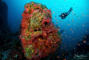 A diver explores a deep reef covered with soft corals. Th... by Filip Staes