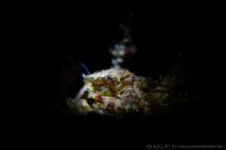 S N O O T #1