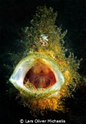 Bigmouth by Lars Oliver Michaelis